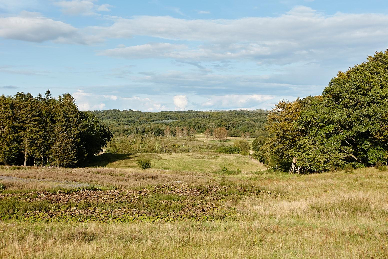 Billede af skoven i nærheden af Provstlund